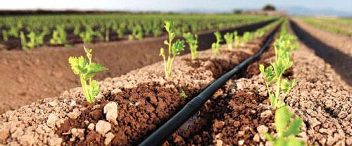 La implementación de sistemas de riego inteligente reducen hasta un 30% el consumo de agua y un 40% las emisiones de CO2