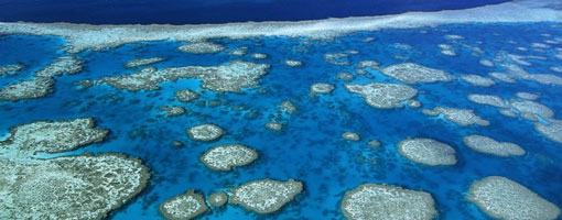 La Gran Barrera de Coral se ha reducido a la mitad en 27 años