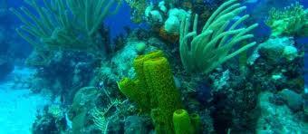 El aumento de temperaturas hará que ecosistemas acuáticos producirán más CO2 que los terrestres