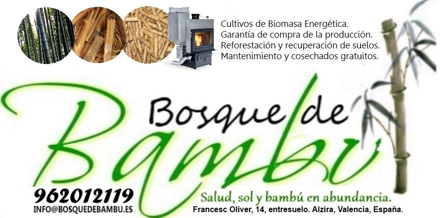 Se proyecta el primer cultivo de biomasa de bamb de europa en espa a - Cultivo del bambu ...
