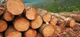 La UAH lidera un proyecto pionero para convertir biomasa en bioproductos de última generación