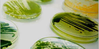 Microalgas para la captura de CO2