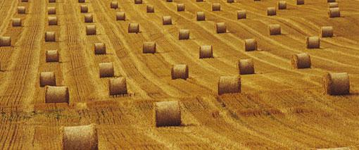 Desarrollan un bioplástico a partir de paja de trigo
