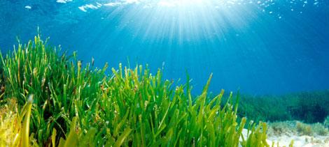 Los fondos marinos almacenan más carbono que los bosques