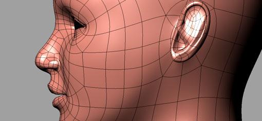 Dos haces nerviosos nos permiten reconocer los rostros