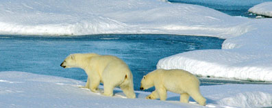 """El Ártico sufre ya los efectos de un """"cambio climático peligroso"""""""