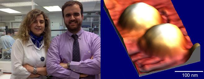 Nanomedicina. Un tratamiento con nanopartículas inhibe el 100% de las metástasis linfáticas