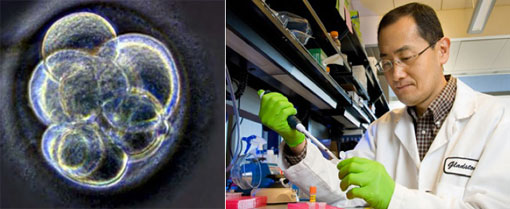 Células madre pluripotentes inducidas, Nobel de Medicina 2012