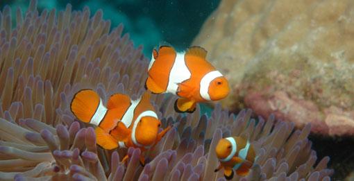 El boom minero en Australia pone en peligro la Gran Barrera de Coral