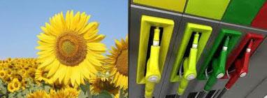 Los Biocombustibles no podrán ser cultivados en áreas de alto valor ecológico