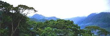 Áreas tropicales protegidas, cada más amenazadas