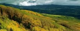 Los bosques con mayor diversidad de árboles producen más madera