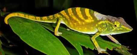Las 100 especies más amenazadas del planeta