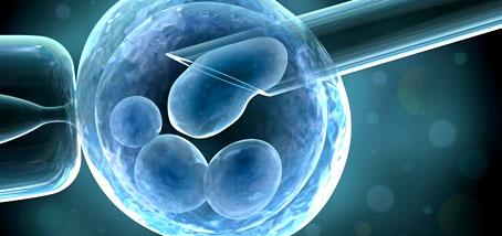 Solo algunas células madre son eficaces para medicina regenerativa