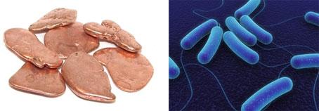 Cobre y destrucción de patógenos