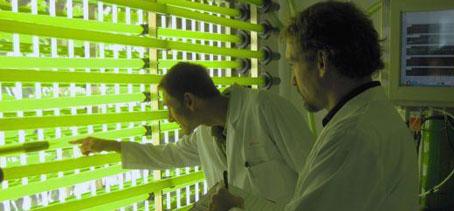 Científicos de la Universidad de Costa Rica desarrollan huertos marinos