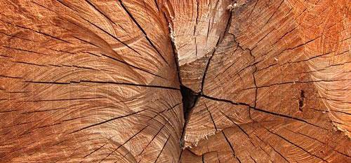 El mercado europeo pone barreras a la madera procedente de talas ilegales