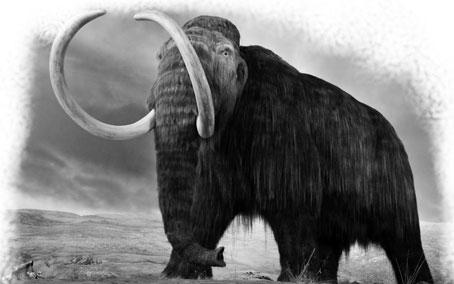 Descubiertas células de mamut en buen estado ¿será posible su clonación?