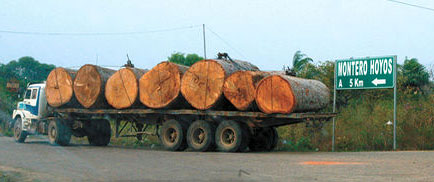 """Green Carbon: Black Trade"". Datos económicos del mercado de tala ilegal de madera"